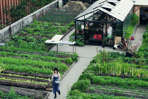 Montar un restaurante saludable Stedsans