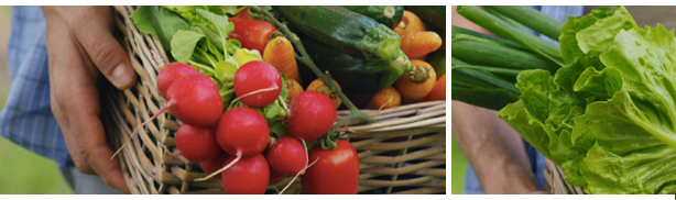 Panier de fruits et légumes. bénéfices restaurant